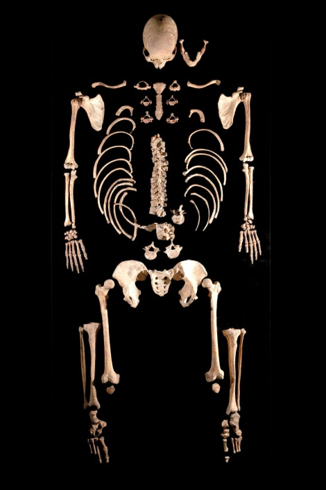 The 7,000-year-old skeleton of a hunter-gatherer with blue eyes.