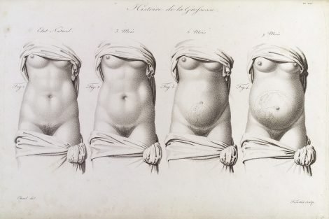 Stages in pregnancy as illustrated in the 19th Century medical text Nouvelles démonstrations d'accouchemens, via Wellcome Images