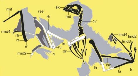 yi qi schematic retouched